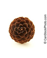 Pinecone - Vertical image of a single pinecone viewed ...