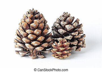 pinecones isolated on white background