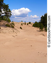 pines and sand