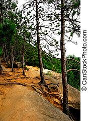 Pines on cliffs