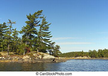Pines on the French River Shore - Pines on the shores of the...