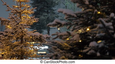 Pines with Christmas lights in the evening park - Evening...