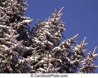 pinetree, ramos