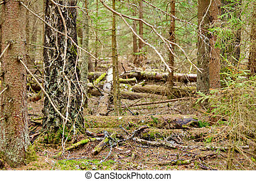 Pinewood background - In the depths of a pine forest natural...