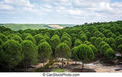 Pinewood. Landscape of Turkey.