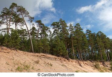 Pinewood on the island Konevets, Ladoga lake, Russia