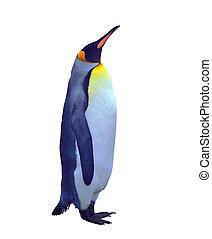 pingüino, encima, emperador, aislado, blanco