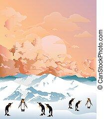 pingüinos, antártico, amanecer