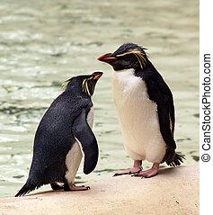 pingüinos, charlar