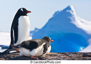 pingüinos, dos