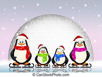 pingüinos, patines