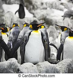 pingüins imperador
