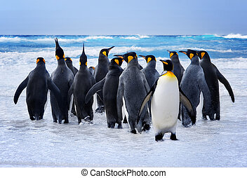 pingüins rei