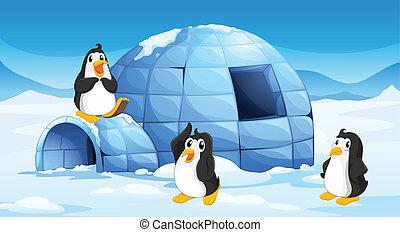 pingüins, três, igloo