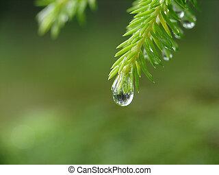 pingo chuva