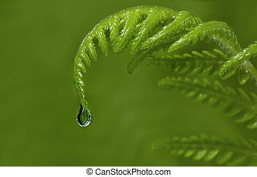 pingo chuva, fern