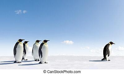 pingouins empereur