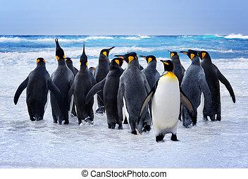 pingouins roi