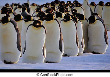 penguin animoal on ici and cold weather