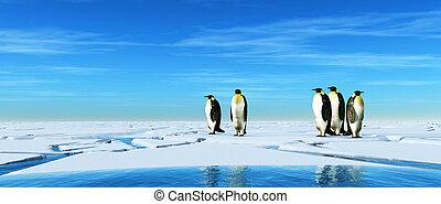 pinguine, gruppe