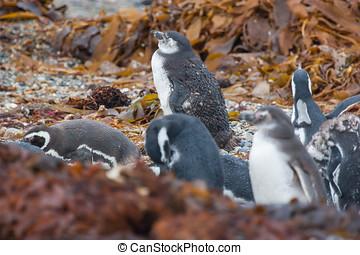 pingvin, part, közé, zöld