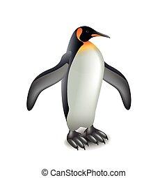 pingwin, odizolowany, na białym, wektor