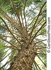 pinho, branches.