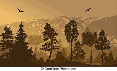 pinho, fundo, paisagem, floresta