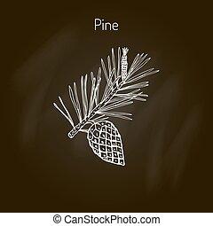pinho, ramo, cone