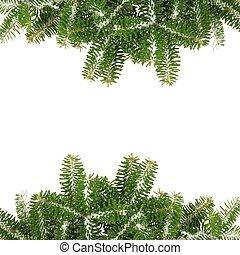 pinho, ramos, com, neve, isolado
