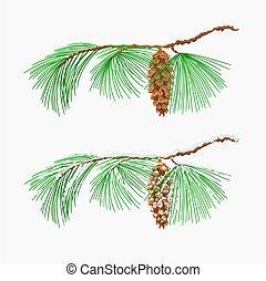 pinho, vetorial, oriental, árvore natal branca, ramo