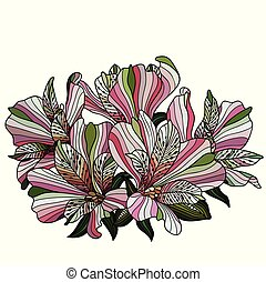 Pink alstroemeria flowers drawing