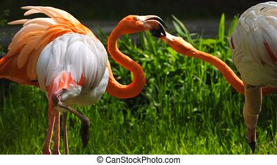 pink and red  flamingos on a green background