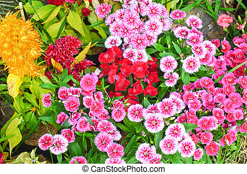 Pink and red flowers beautiful