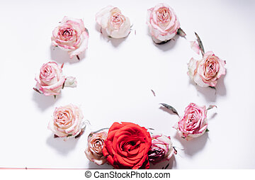 Pink and red roses buds on white background. Flat lay, top view