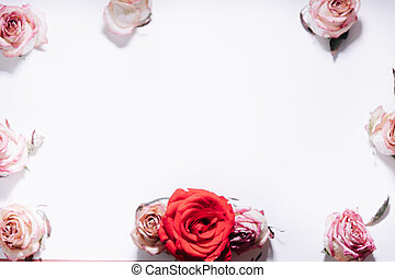 Pink and red roses buds on white background