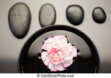 Pink and white carnation floating in a black bowl with aligned black stones above it focus on the flower