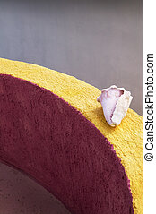 Pink and White Conch Shell