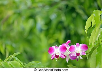 orchid in green