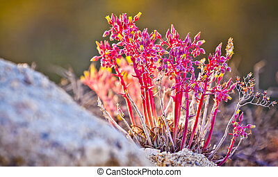 Pink and Yellow Desert Flowers