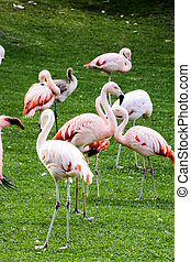 Pink Animal Bird Wild Flamingo