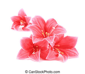Pink artificial flowers.