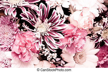 pink aster background closeup nature