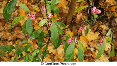 pink autumn flowers with green leav