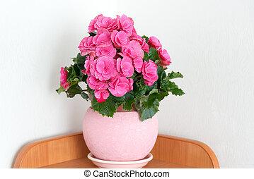 pink azalea in the interior of room
