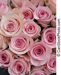 photograph of a display of very sweet pink roses