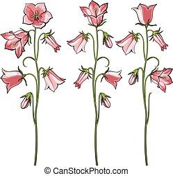 Pink bellflowers vector illustration set in sketch style.