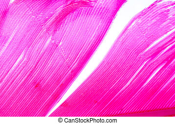 pink bird feather  texture