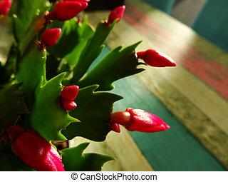 Pink Blooming Cactus