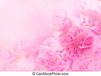 Pink blossom, Beautiful flower - Pink blossom background, ...